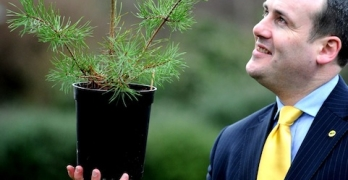 Scots Pine is named as national tree of Scotland