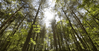 Forestry and Woodland Strategy consultation