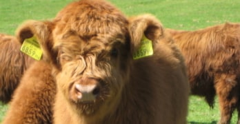 Seven year high in reported cases of livestock worrying