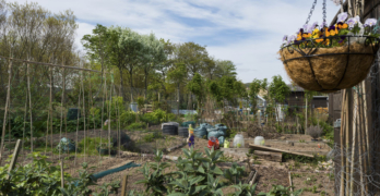 Survey on allotment space across Aberdeenshire